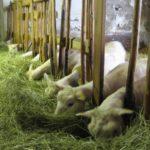 Utfodring